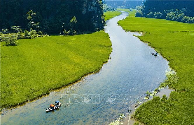 Captivating golden ripe rice fields in Ninh Binh hinh anh 1