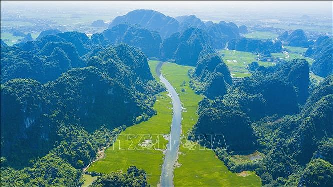 Captivating golden ripe rice fields in Ninh Binh hinh anh 2