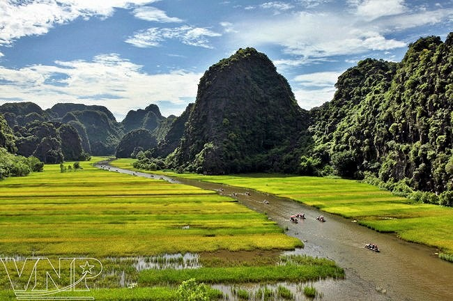 Captivating golden ripe rice fields in Ninh Binh hinh anh 4
