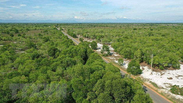 Forestry to become modern economic-technological sector hinh anh 1