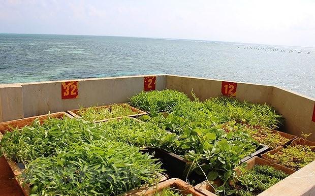 Truong Sa archipelago bursting with vitality hinh anh 2