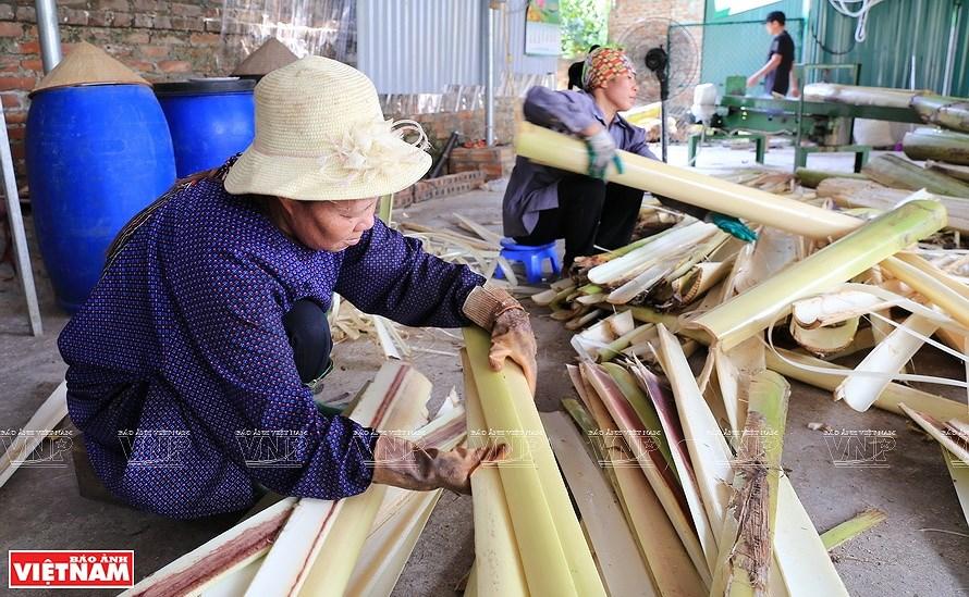 Vietnamese banana fibers reach out to world market hinh anh 2