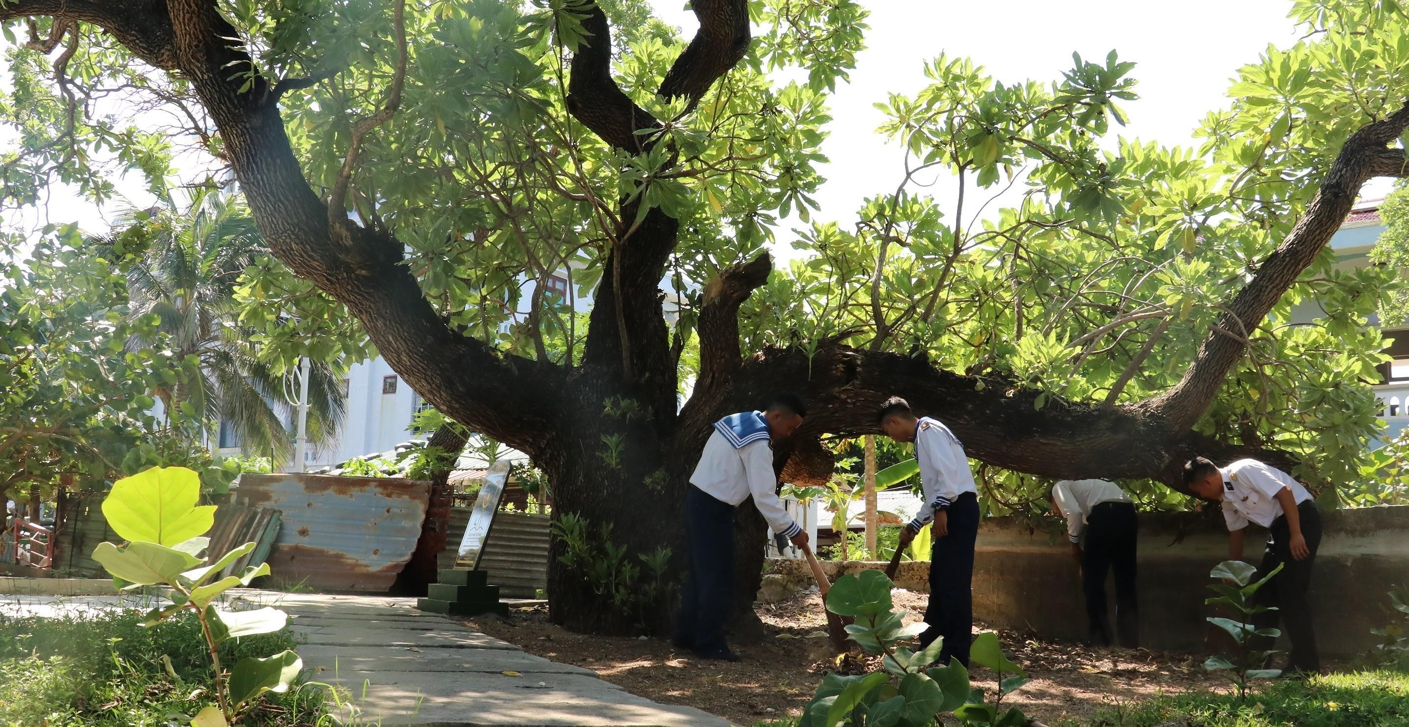 Heritage trees on Truong Sa archipelago hinh anh 5