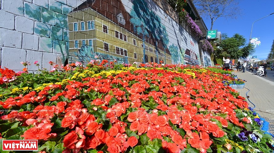 Da Lat, the capital of flower export hinh anh 1