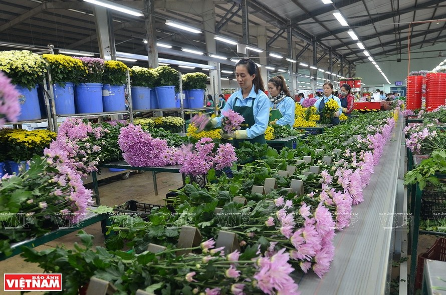 Da Lat, the capital of flower export hinh anh 8