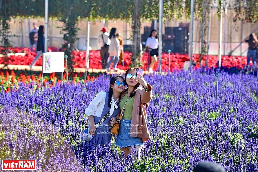 Da Lat, the capital of flower export hinh anh 3