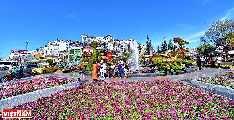 Da Lat, the capital of flower export hinh anh 5