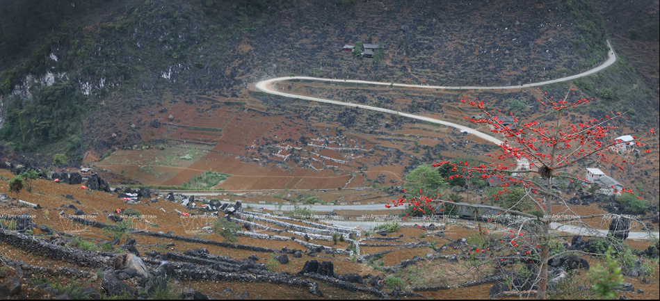 Red silk-cotton flower heats up Ha Giang rocky plateau hinh anh 1