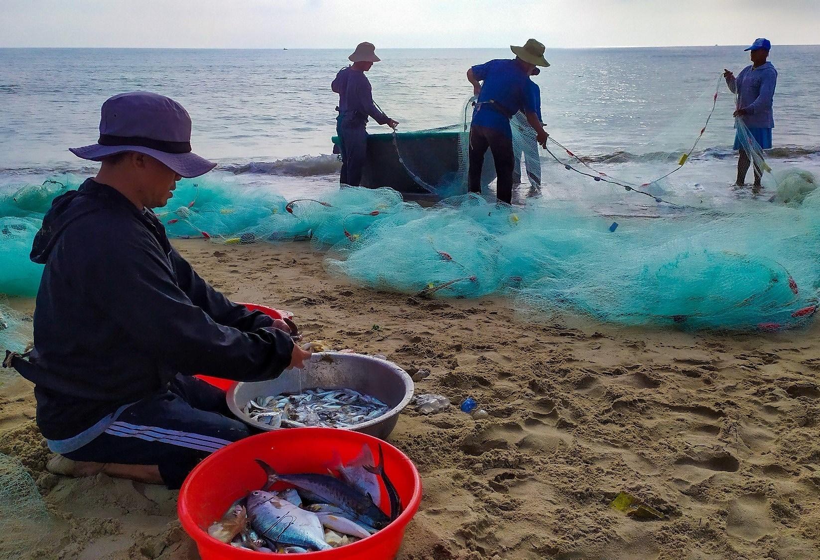 Fishermen pull in nets in Da Nang city hinh anh 6