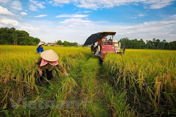 Steering committee talks review of implementation of Party resolution on agriculture hinh anh 1