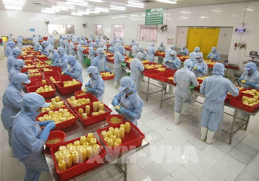 Fruit, vegetable export up 17.4 percent in H1 hinh anh 1