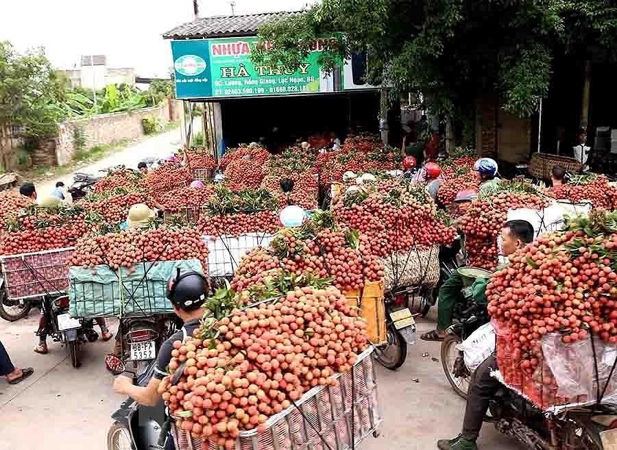 [Photo] Dai hoi Dang XII: Buoc vao ky nguyen hoi nhap va phat trien hinh anh 23