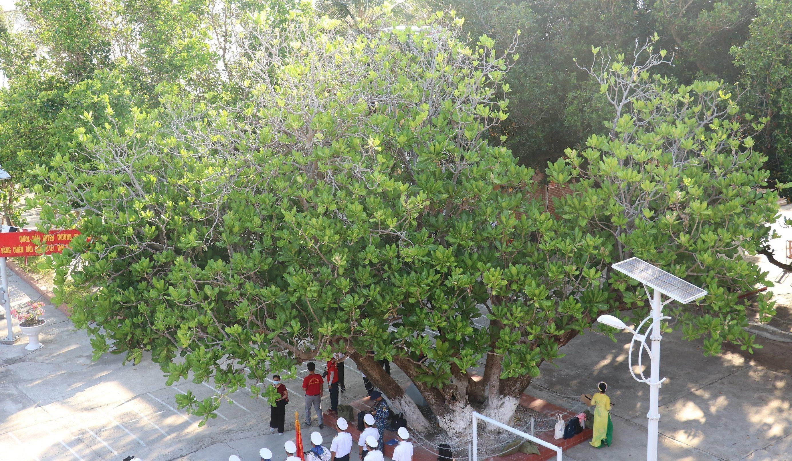 组图:长沙群岛上主权界碑——遗产树 hinh anh 1