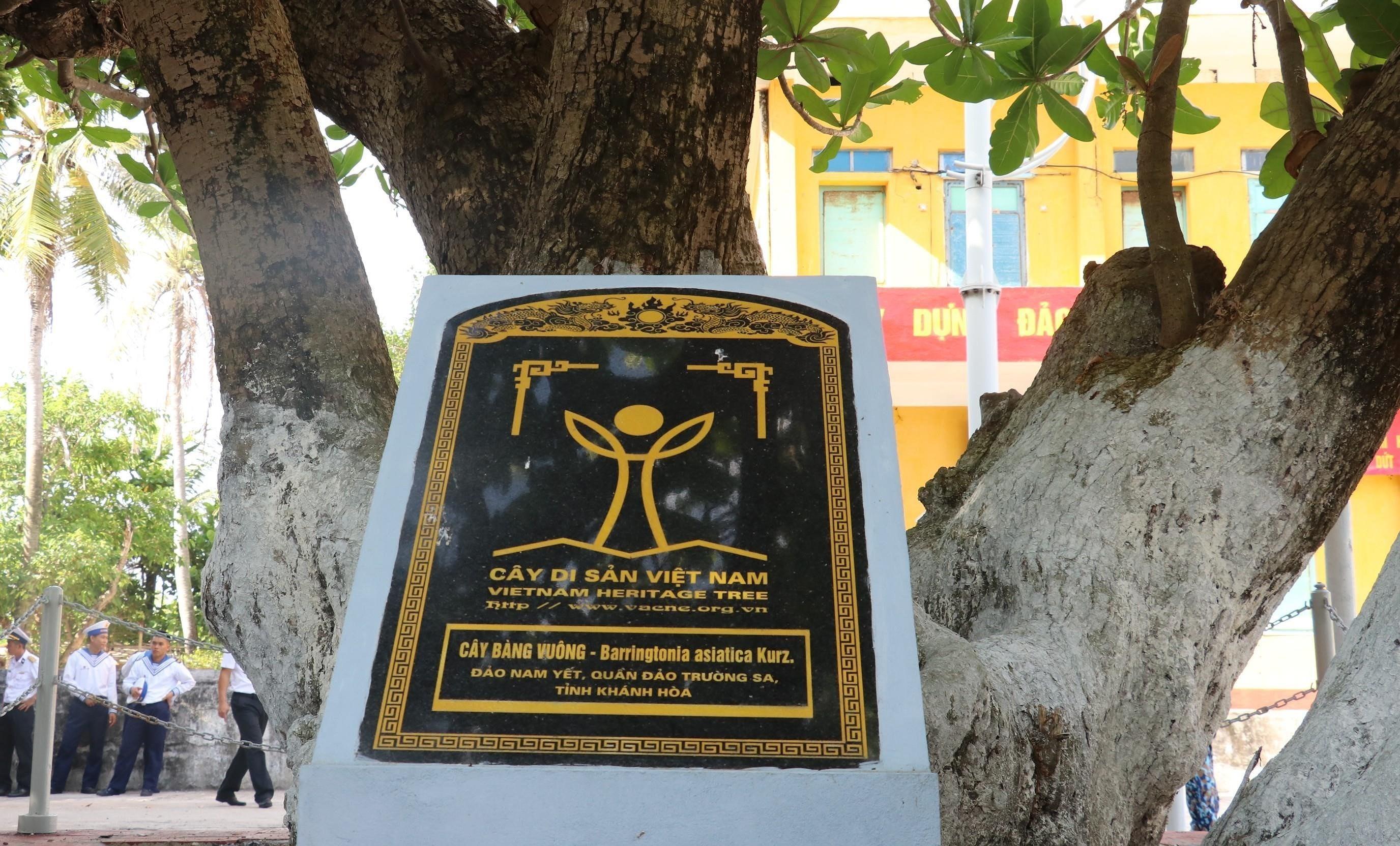 组图:长沙群岛上主权界碑——遗产树 hinh anh 4