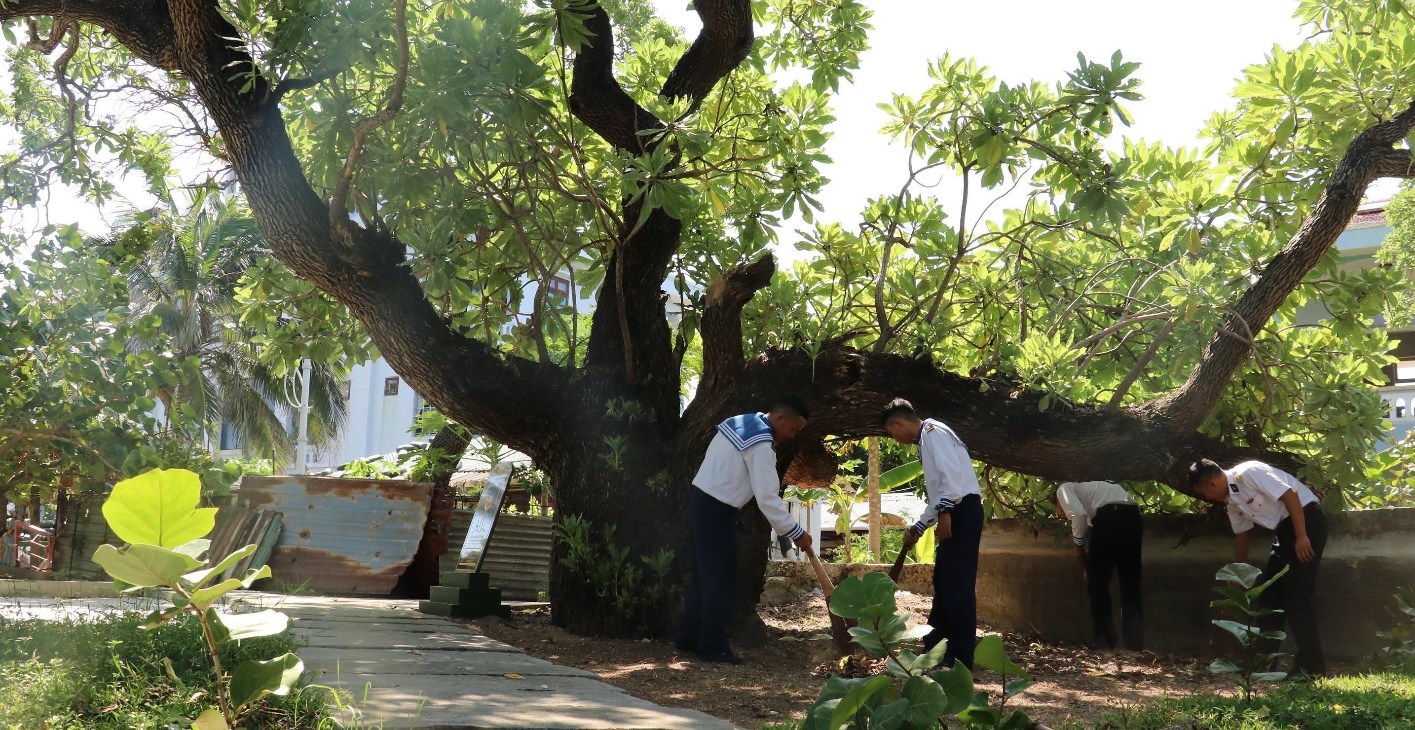 组图:长沙群岛上主权界碑——遗产树 hinh anh 5