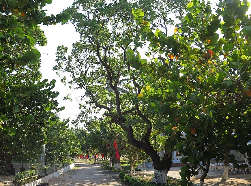 Greenery in Truong Sa island district hinh anh 6