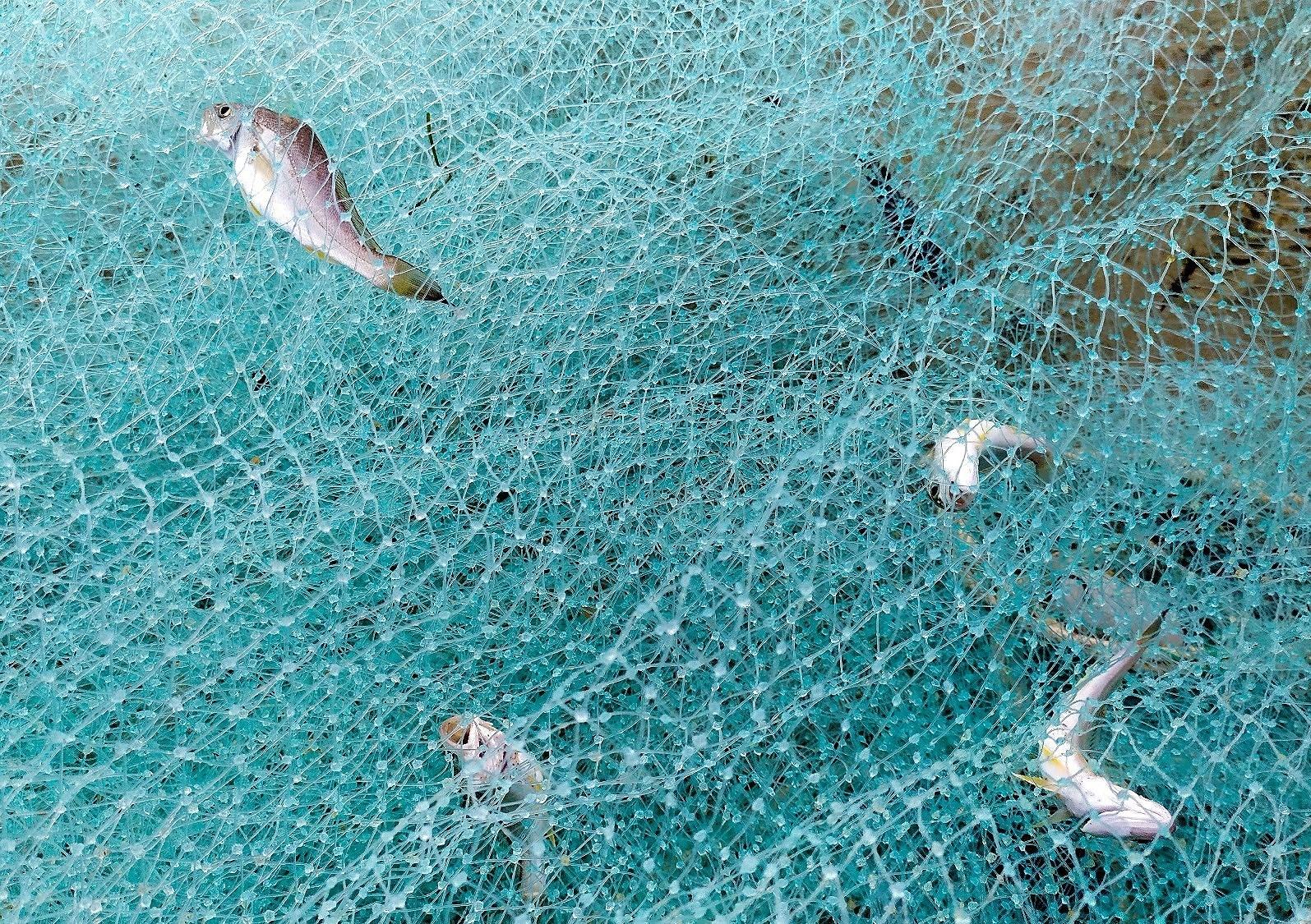 Fishermen pull in nets in Da Nang city hinh anh 5