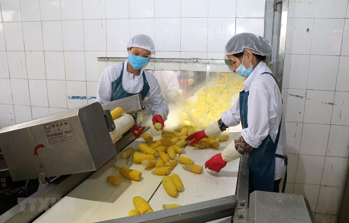 Agriculture export value up 20 percent in Q1 hinh anh 1
