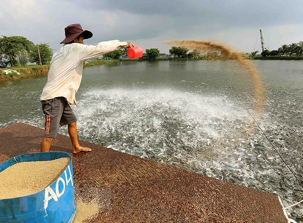 Dong Thap aims to cut down poverty ratio by 0.5 percent in 2021 hinh anh 1