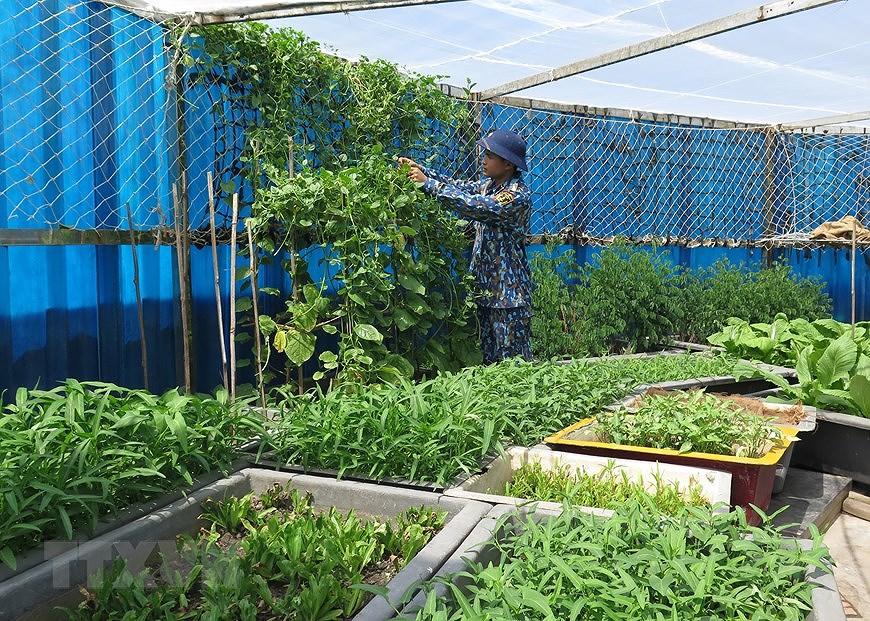Soldados vietnamitas tinen de verde la tierra arenosa del distrito insular de Truong Sa hinh anh 7