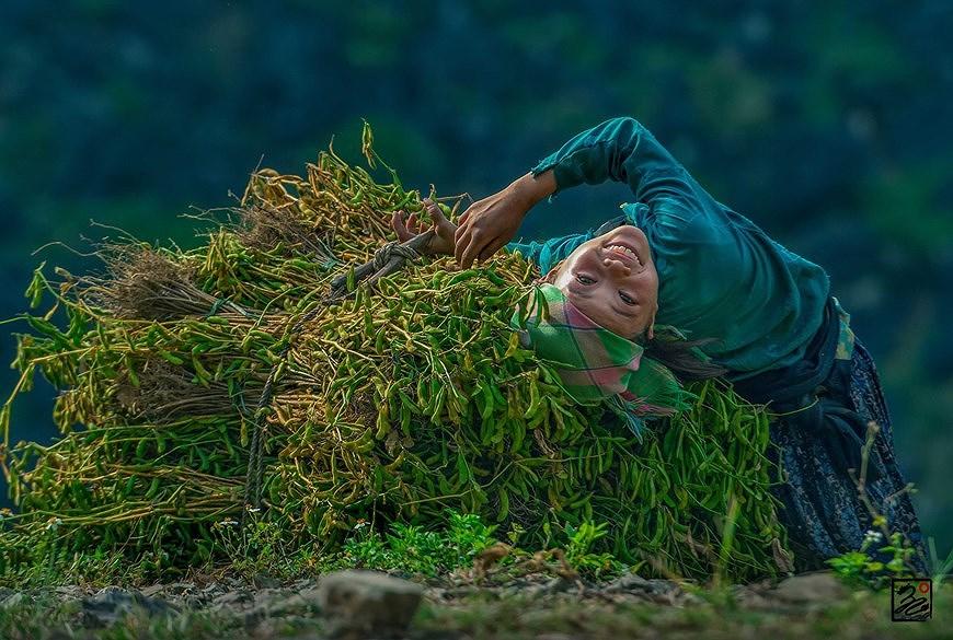 Exposicion de fotos muestra belleza de Vietnam hinh anh 3