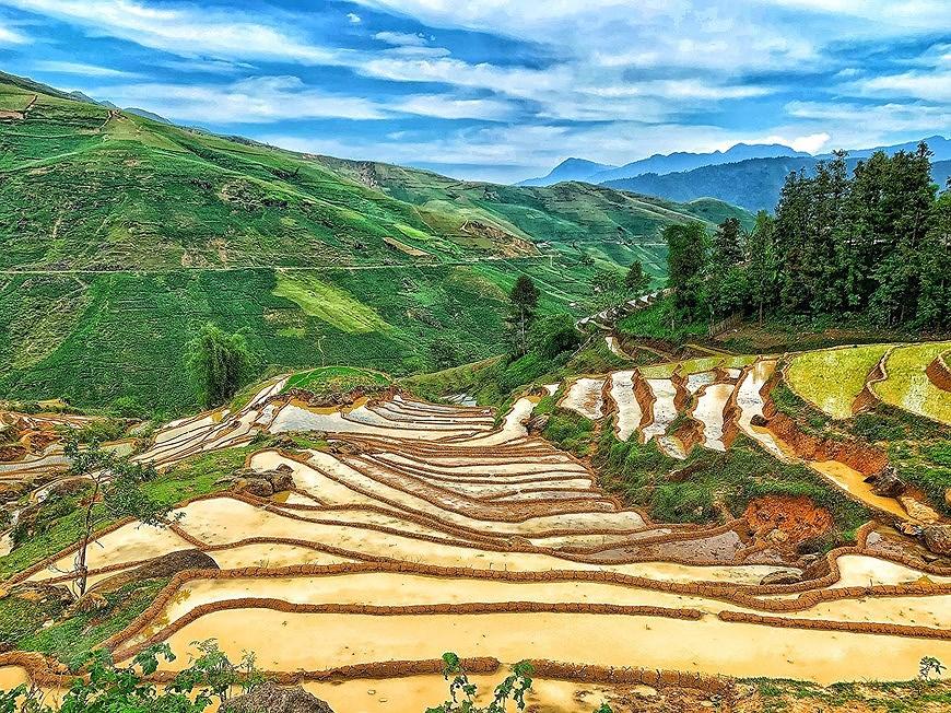 Belleza espectacular de las terrazas arroceras en la comuna de vietnamita Y Ty hinh anh 5