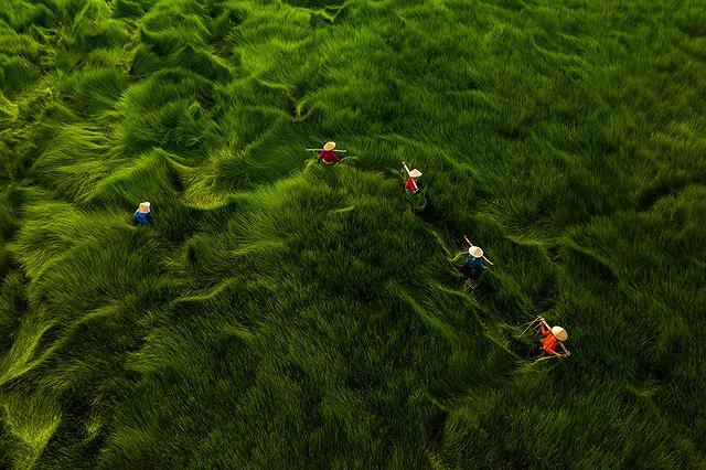Quatre photos prises par des photographes vietnamiens ont remporte des prix d'APA 2020 hinh anh 3
