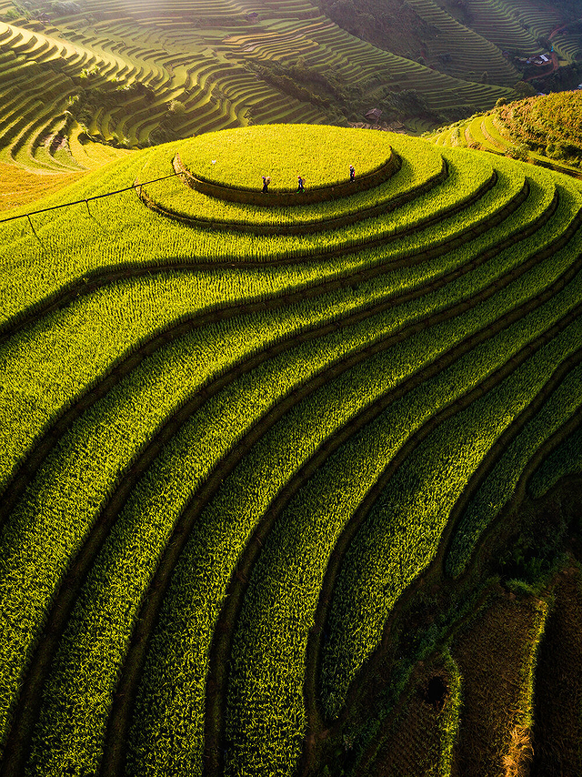 Quatre photos prises par des photographes vietnamiens ont remporte des prix d'APA 2020 hinh anh 4